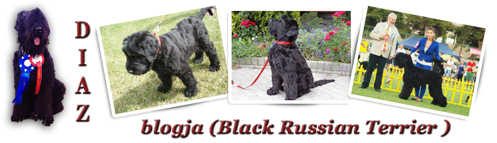Diaz blogja ( Black Russian Terrier)